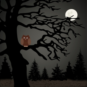 night-owl-1256167-m